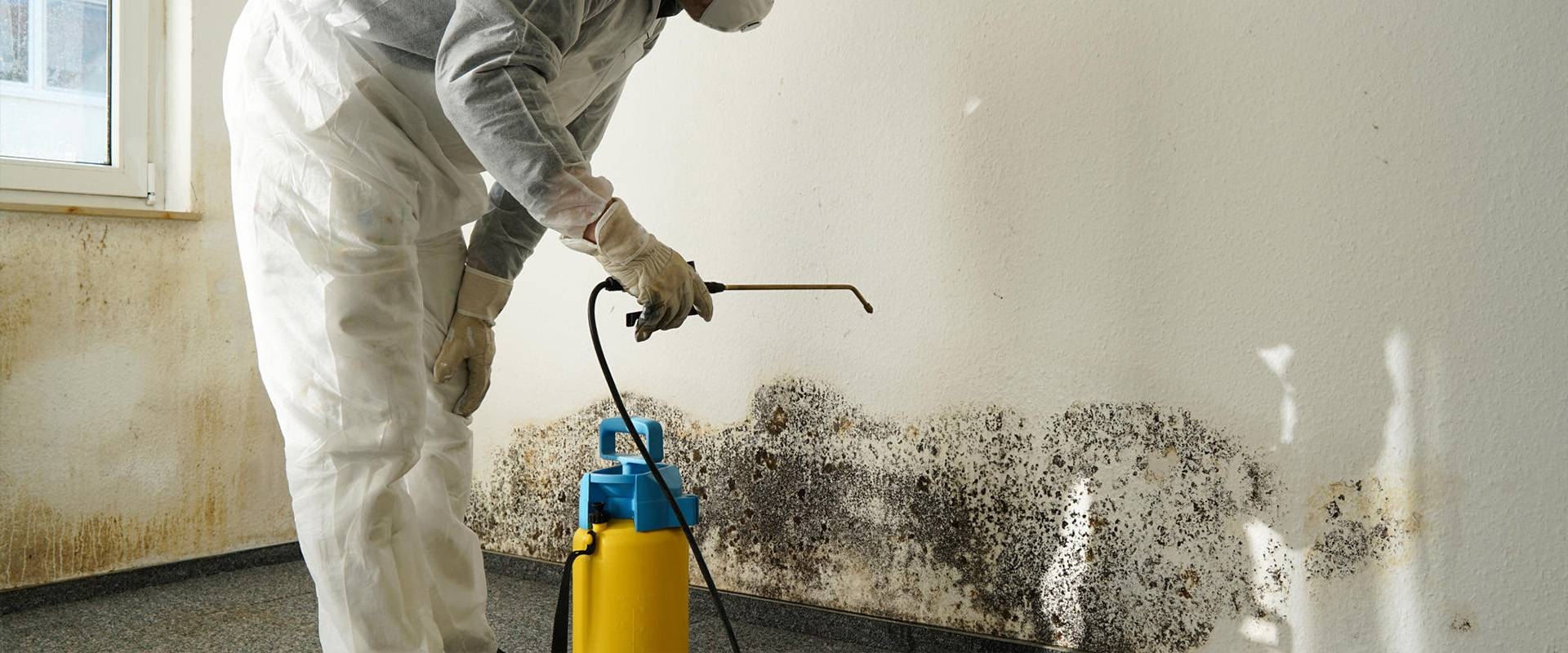 Mould removal service banner.